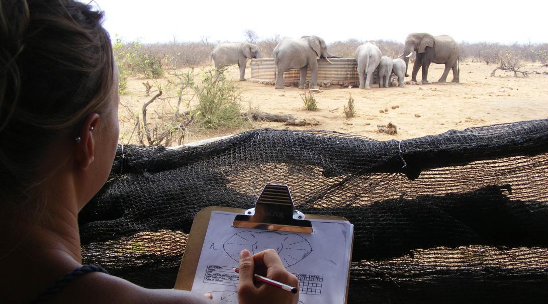 Projects Abroad volontärer som arbetar med vilda djur i Botswana identifierar elefanter
